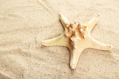 Starfish on sandy beach, close up Royalty Free Stock Image