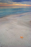 Starfish on a sandy beach Stock Image