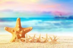 Starfish on sandy beach royalty free stock photos