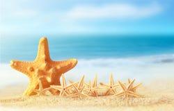 Starfish on sandy beach stock image
