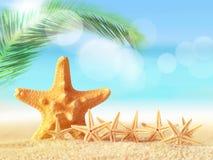 Starfish on sandy beach stock images