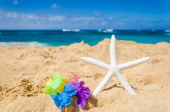 Starfish on the sandy beach Royalty Free Stock Photos