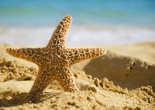 Starfish on sandy beach. In Hawaii, Kauai Stock Photos
