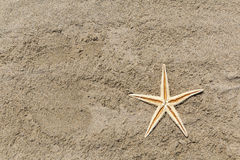 Starfish on a Sandy Beach Royalty Free Stock Photography