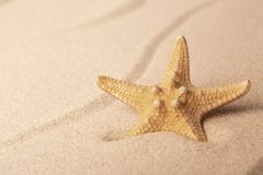 Starfish on sandy beach stock images