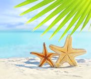 Starfish on the sandy beach and palm leaf stock photography