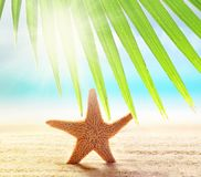 Starfish on the sandy beach and palm leaf. At ocean background royalty free stock photos
