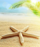 Starfish on the sandy beach. Palm and ocean as background. Royalty Free Stock Photos