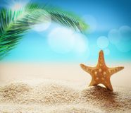Starfish on the sandy beach and palm Royalty Free Stock Photo