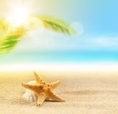 Starfish on the sandy beach and palm Stock Images