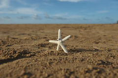 Starfish on sandy beach with two wedding bands Stock Photography