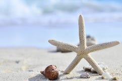 Starfish on sandy beach Royalty Free Stock Image
