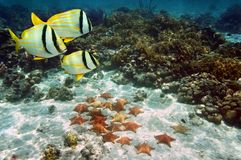 Starfish on sandy ocean floor royalty free stock photos