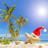 Starfish with Santa hat by the ocean Royalty Free Stock Images