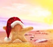 Starfish in santa hat on summer beach Stock Photos