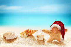 Starfish in santa hat on summer beach Royalty Free Stock Image