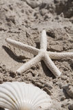 Starfish scallop shells beach shell sea sand summer vacation. Summer holiday Royalty Free Stock Photos