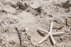 Starfish scallop shells beach shell sea sand summer vacation and holiday Royalty Free Stock Photos