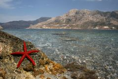 Starfish by the sea royalty free stock photography