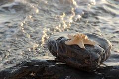 starfish at the sea Royalty Free Stock Photo