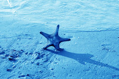 Starfish in the sea Royalty Free Stock Photo