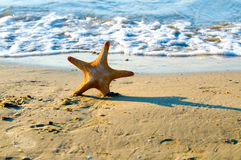 Starfish in the sea Stock Image