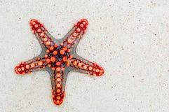 Starfish, Sea, Africa, Kenya Stock Photo