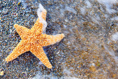 Starfish on sea coast Stock Photos