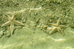 Starfish in the sea Royalty Free Stock Photos