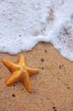 Starfish and Sea Foam Stock Image