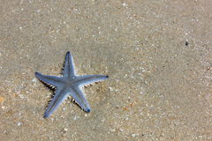 Starfish. In sea Huahin Thailand Stock Photography