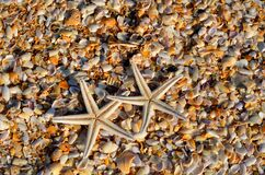 Starfish, Sea Life, Animal, Coral Royalty Free Stock Images