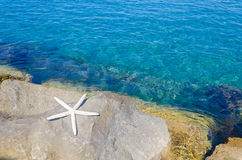 Starfish by the sea Stock Photos