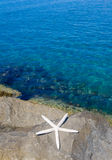 Starfish by the sea Stock Photography