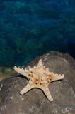 Starfish by the sea Stock Photo