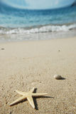 Starfish by the sea Royalty Free Stock Photos