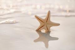 Starfish on sea ocean beach in Florida, soft gentle sunrise ligh Stock Photos