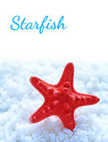 Starfish on sea salt Stock Photography