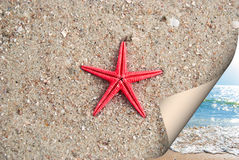Starfish on sea sand Stock Image