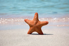 Starfish on sea sand Royalty Free Stock Photo