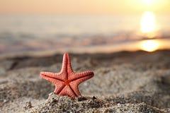 Starfish on sea sand beach Royalty Free Stock Photo