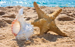 Starfish and sea shell Stock Photo