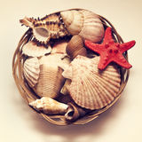 Starfish and sea shell in a bucket  on a vintage background. Red starfish and sea shells in a bucket  on a vintage background Stock Photo
