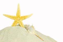 Starfish and sea shell isolated Stock Photography