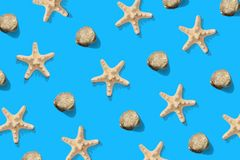 Starfish and sea shell pattern on blue. Summer minimalistic background. Top view, flat lay. Starfish and sea shell pattern on blue background. Summer stock photos