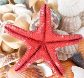 Starfish and sea shells Royalty Free Stock Images