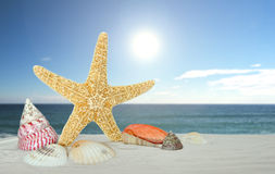 Starfish with sea shells Stock Image
