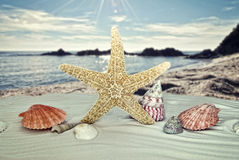 Starfish with sea shells Royalty Free Stock Image