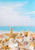 Starfish and sea shells Royalty Free Stock Photos