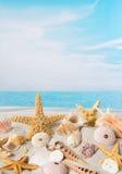 Starfish and sea shells Royalty Free Stock Photos